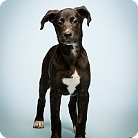 Adopt A Pet :: Stockton - MEET ME - Norwalk, CT