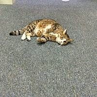 Adopt A Pet :: Tabitha - Cerritos, CA