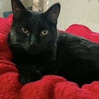 Adopt A Pet :: Charlie - Saginaw, MI