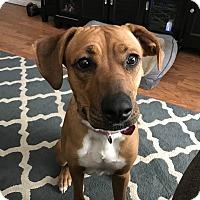 Adopt A Pet :: Eevee - Hawthorne, CA