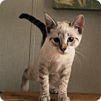 Adopt A Pet :: Empress - Savannah, GA