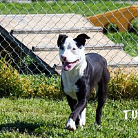 Adopt A Pet :: Tuck - Patterson, CA
