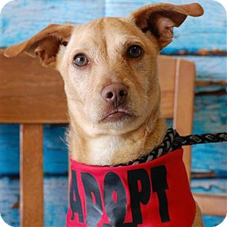Terrier (Unknown Type, Medium) Mix Puppy for adoption in Concord, North Carolina - Chachie
