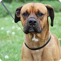 Adopt A Pet :: Echo - Marietta, OH