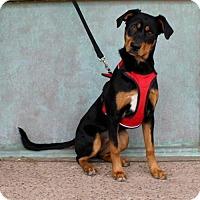 Adopt A Pet :: Luna - Albuquerque, NM