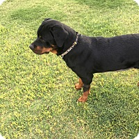 Adopt A Pet :: Dorothy - Gilbert, AZ