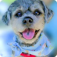 Adopt A Pet :: Bobee family dog - Sacramento, CA