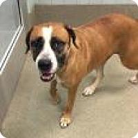 Adopt A Pet :: Mika 1C23 - Columbus, GA
