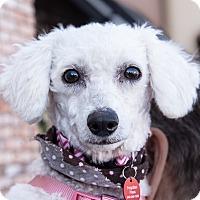 Adopt A Pet :: Pala - San Marcos, CA