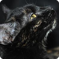 Adopt A Pet :: Little Rascal - Columbus, OH