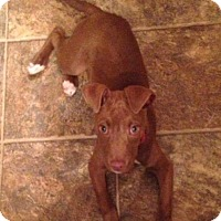 Adopt A Pet :: Kayla - Channahon, IL