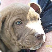 Adopt A Pet :: Sunshine - Mexia, TX