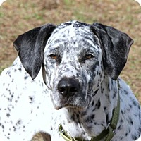 Adopt A Pet :: Spotty Aka Bella - Loxahatchee, FL
