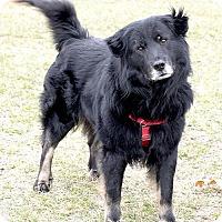 Adopt A Pet :: Snowflake - ADOPTION PENDING - Livonia, MI