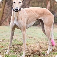 Adopt A Pet :: Mallory - Dallas, TX