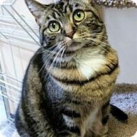 Adopt A Pet :: Marley - Encinitas, CA