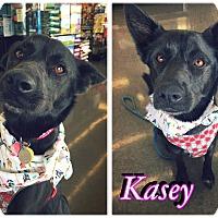 Adopt A Pet :: Kasey - Converse, TX