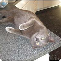 Adopt A Pet :: Sterling - Jeffersonville, IN
