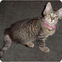Adopt A Pet :: Hannah - Franklin, NC