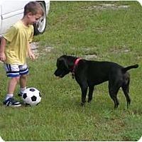 Adopt A Pet :: Coco - Bloomingdale, GA