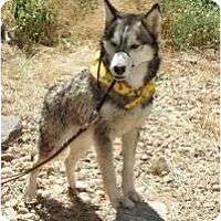 Adopt A Pet :: Leah (La-ya) - Golden, CO