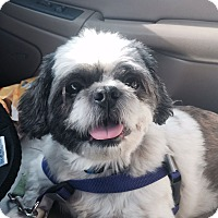 Adopt A Pet :: Guy - Knoxville, TN
