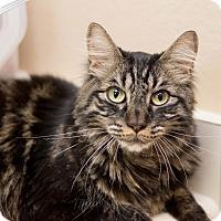 Adopt A Pet :: Moby - Fountain Hills, AZ