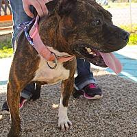 Adopt A Pet :: Venus - Odessa, TX