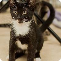 Adopt A Pet :: Zen Master - Alexandria, VA