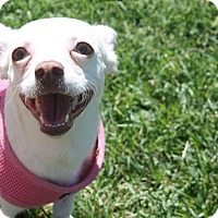 Adopt A Pet :: Joy - Henderson, NV