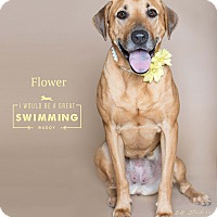 Adopt A Pet :: Flower - Houston, TX