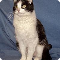 Adopt A Pet :: Quicksilver - Colorado Springs, CO