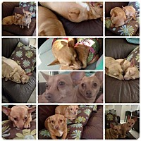 Adopt A Pet :: Laverne & Shirley - Tenafly, NJ