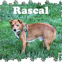 Adopt A Pet :: Rascal - Fallston, MD