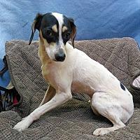 Adopt A Pet :: Nico - Lawrenceville, GA