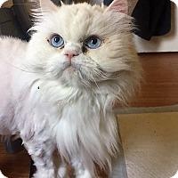 Adopt A Pet :: Peto - Toronto, ON