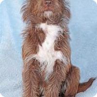 Adopt A Pet :: Rosenburg - Encinitas, CA