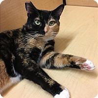 Adopt A Pet :: Tigger - Sherwood, OR