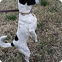 Adopt A Pet :: Princess - Fort Riley, KS