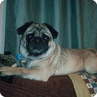 Adopt A Pet :: Mortimer - South Amboy, NJ