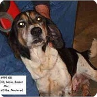 Adopt A Pet :: # 991-08 - RESCUED! - Zanesville, OH