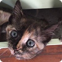 Adopt A Pet :: Melody - Union, KY