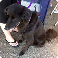 Adopt A Pet :: Sadie - West Richland, WA