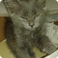 Adopt A Pet :: Zach - Whittier, CA