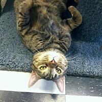 Adopt A Pet :: LuLu - Leonardtown, MD