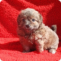 Adopt A Pet :: Frankie - Henderson, NV