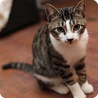 Adopt A Pet :: Tigger - Atlanta, GA