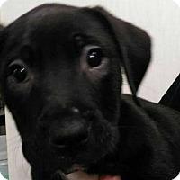 Adopt A Pet :: Ellen - Plainfield, IL