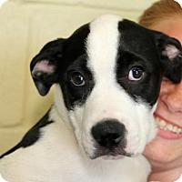Adopt A Pet :: Simon - Winchester, TN