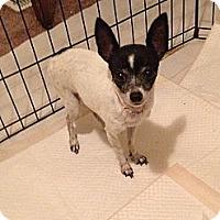 Adopt A Pet :: Rosey - Seattle, WA